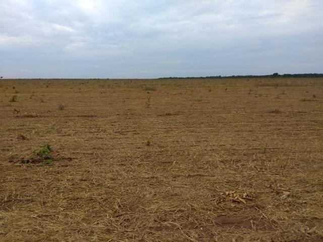 Fazenda 9.900 ha São Felix Do Araguaia - Foto 6