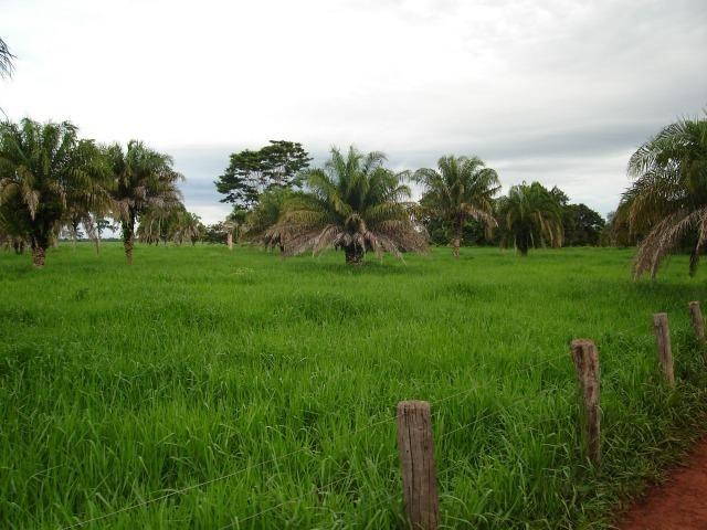 Fazenda 6,000 ha Vale do Araguaia MT. Cinematográfica - Foto 5