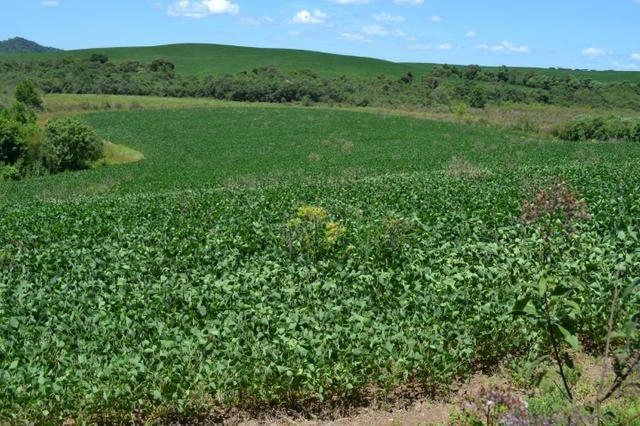 Oportunidade Produtor Rural Terreno em Bela Vista do Toldo