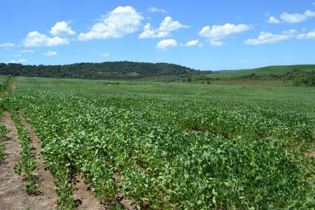Oportunidade Produtor Rural Terreno em Bela Vista do Toldo - Foto 3