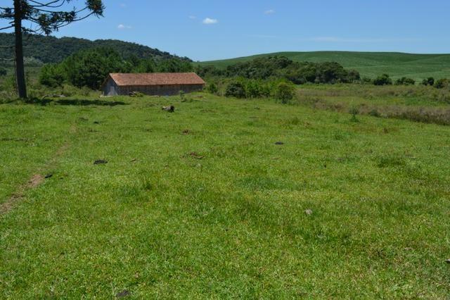 Oportunidade Produtor Rural Terreno em Bela Vista do Toldo - Foto 8