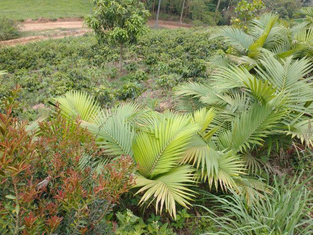 Chácara região Paraju - Foto 9