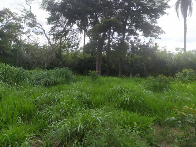Vendo terreno a 4km da Água Quente - Foto 5