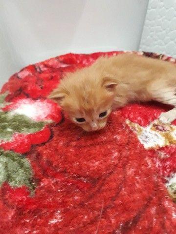 Doa _se gatinhos filhotes para quem realmente tem interesse  de cuidar ! - Foto 3