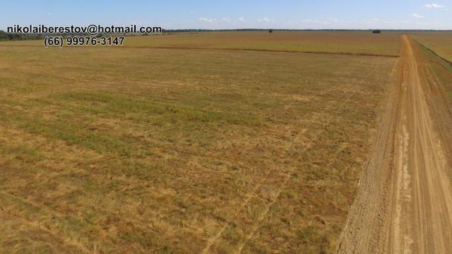 Fazenda 400 hectares nordeste mt nikolaiimoveis
