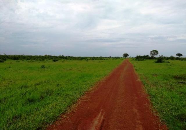 Fazenda 9.900 ha São Felix Do Araguaia