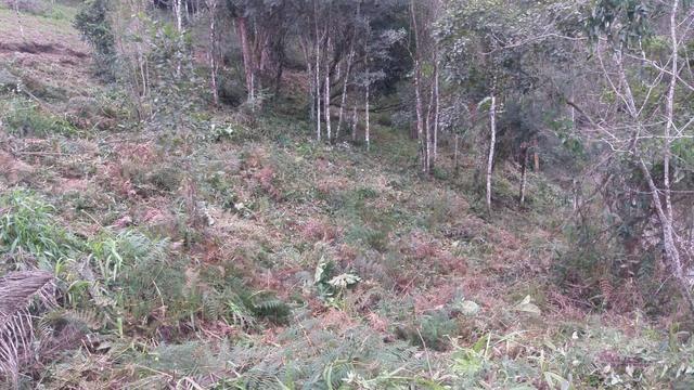 Terreno parcelado alto gasparinho - leia o anúncio - Foto 14
