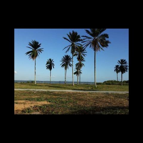 Casas de praia, Lotes para construção costa de Itapema - Foto 17