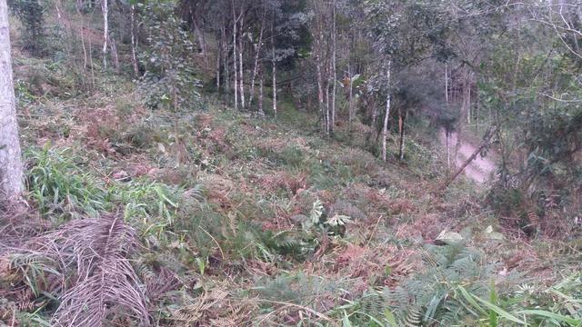 Terreno parcelado alto gasparinho - leia o anúncio - Foto 6