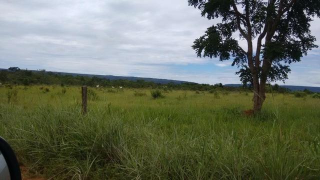 Vendo Fazenda com 1.523 Hectares na região do Manso - Foto 2