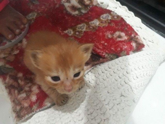 Doa _se gatinhos filhotes para quem realmente tem interesse  de cuidar ! - Foto 4