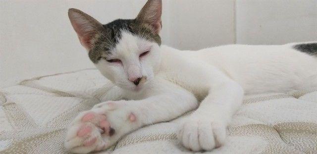 Adoção de gato macho resgatado  - Foto 2