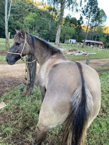 Potranca a venda ( égua - cavalo )  - Foto 2