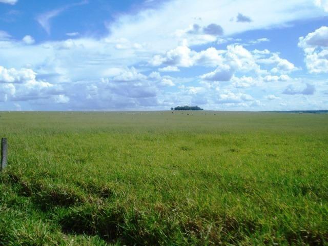 Fazenda 21.100 ha Diamantino MT - Foto 6