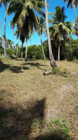 Patacho, venha morar ou ter um negocio em uma das praias mais belas do país. - Foto 12