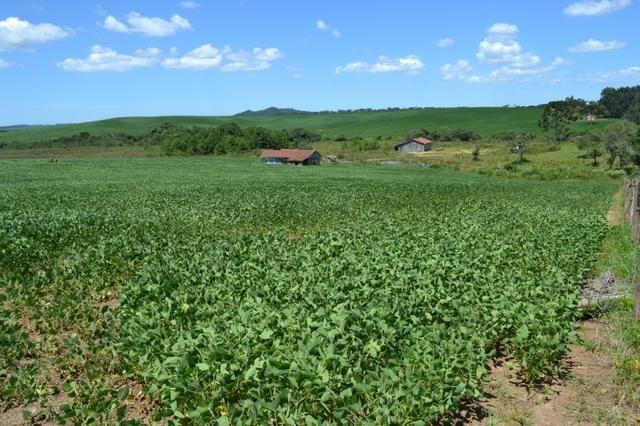 Oportunidade Produtor Rural Terreno em Bela Vista do Toldo - Foto 5