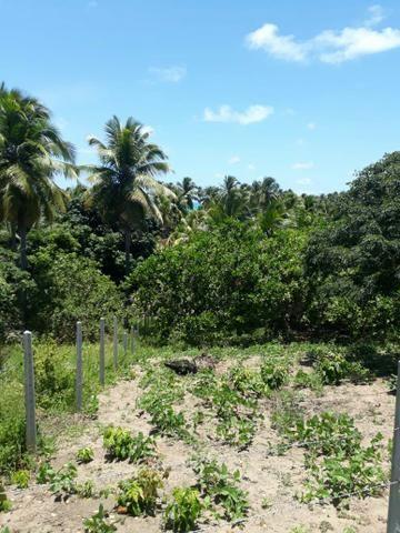 Terreno lindo em Japaratinga, proximo a praia e as bicas 950 m2 - Foto 5