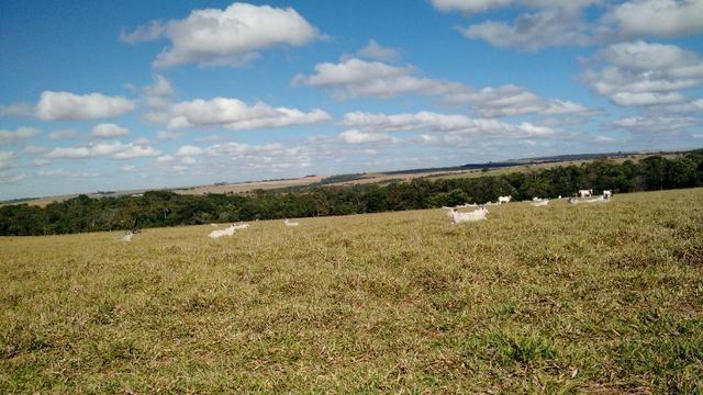 Fazenda para lavoura de 44 alqueires a venda na região de Caldas Novas GO - Foto 16