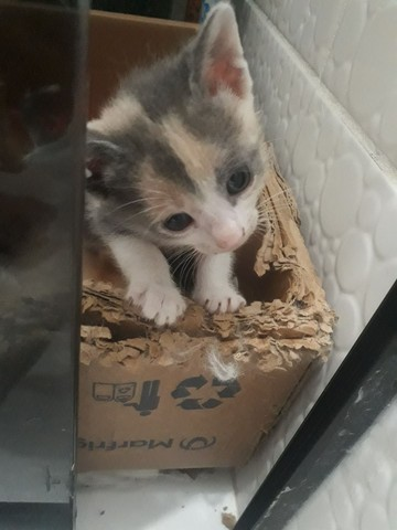 Doa _se gatinhos filhotes para quem realmente tem interesse  de cuidar ! - Foto 2
