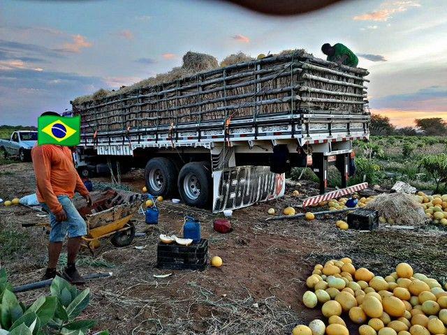 CAMINHÃO 18310 TRUCK 310 CAVALOS - Foto 5