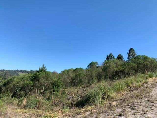 Caxias do Sul - Terreno - Parada Cristal - Foto 6