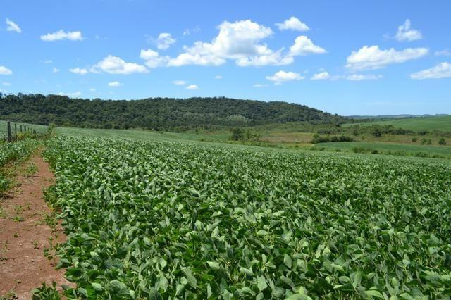 Oportunidade Produtor Rural Terreno em Bela Vista do Toldo - Foto 6