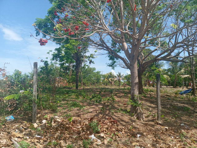 Terreno no panaquatira valor 15 mil  - Foto 3