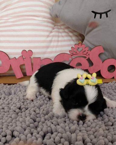 Filhotes de várias raças de cachorros - Foto 3