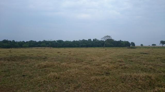 Fazenda para lavoura de 44 alqueires a venda na região de Caldas Novas GO - Foto 3