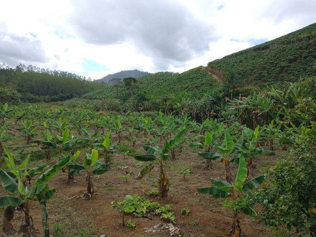 Propriedades 9 alqueires Araguaia - Foto 12