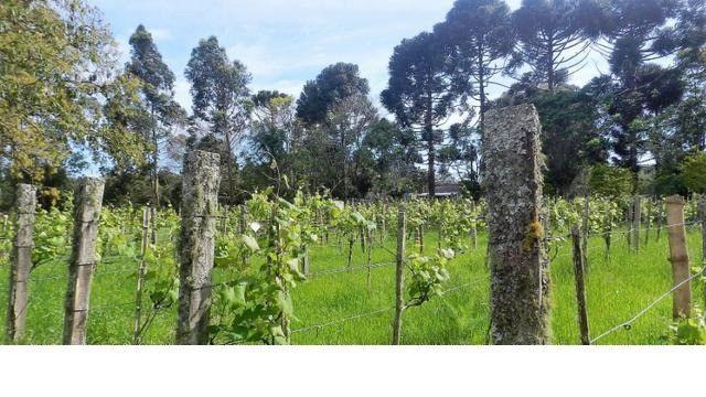 Velleda of sítio 12ha 9 açudes, campo, 5km RS040, produzir, morar ou lazer - Foto 4