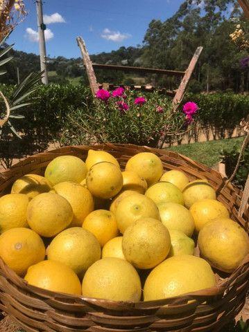 Frutas Congeladas e naturais - Foto 5
