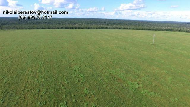 Fazenda nordeste mt 7.000 hectares nikolaiimoveis