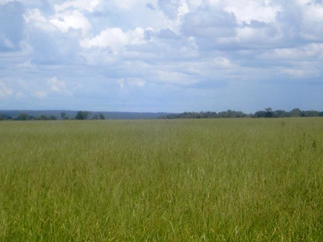 Fazenda 21.100 ha Diamantino MT - Foto 10