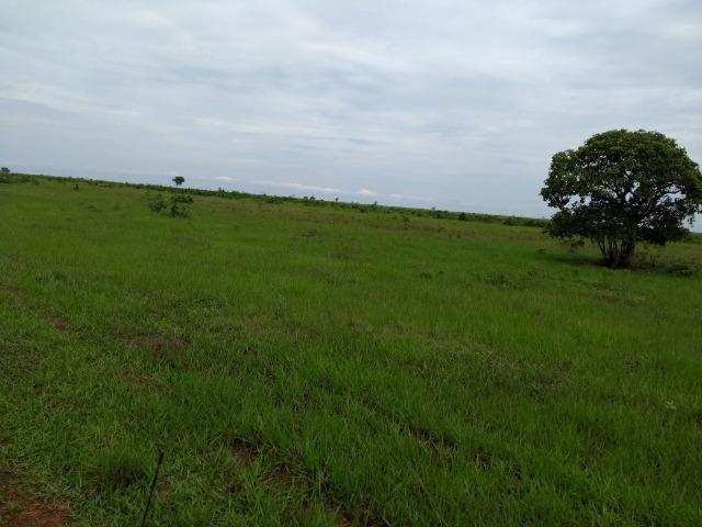 Fazenda 9.900 ha São Felix Do Araguaia - Foto 3
