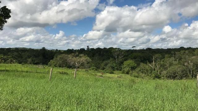 Vendo propriedade em Alagoinhas/Ba - Foto 3
