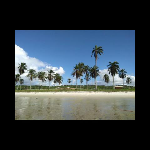 Casas de praia, Lotes para construção costa de Itapema - Foto 8