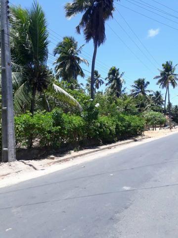 Terreno lindo em Japaratinga, proximo a praia e as bicas 950 m2 - Foto 6