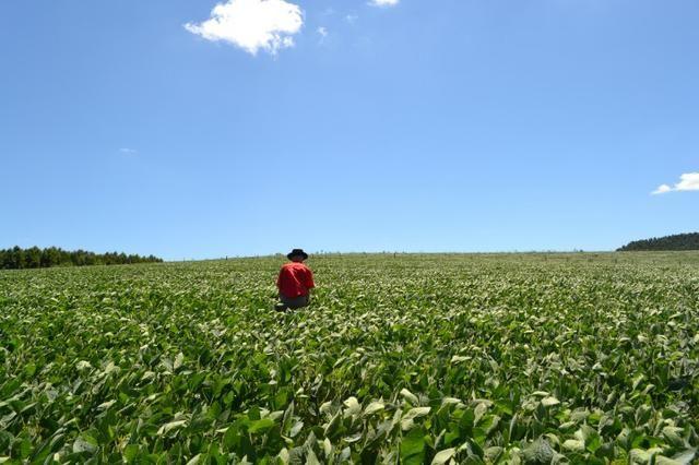 Oportunidade Produtor Rural Terreno em Bela Vista do Toldo - Foto 7