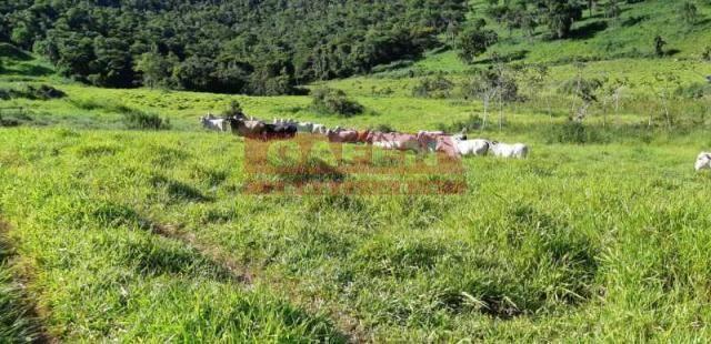OPORTUNIDADE 2 FAZENDO JUNTAS EXCELENTE INVESTIMENTO !! - Foto 20