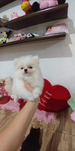 Filhotes de várias raças de cachorros