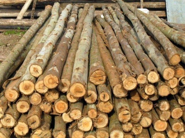madeiras em geral, melhor preço!  - Foto 3
