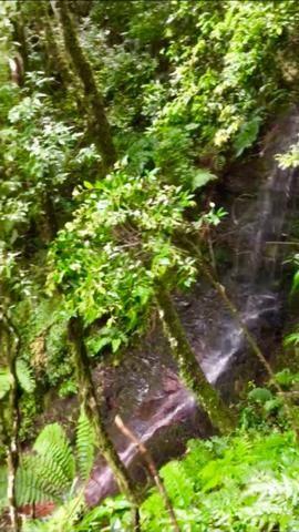Chácara com cachoeira em Urubici - Foto 9