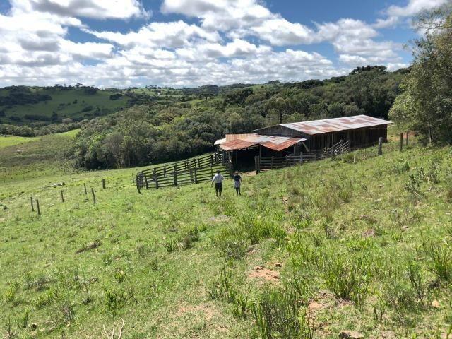 Fazenda 86 hectares Cazuza Ferreira - Foto 2