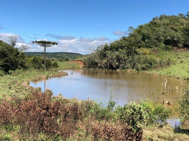 Fazenda 86 hectares Cazuza Ferreira