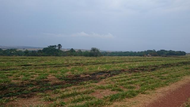 Fazenda para lavoura de 44 alqueires a venda na região de Caldas Novas GO - Foto 8