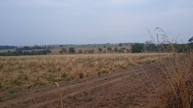 Fazenda para lavoura de 44 alqueires a venda na região de Caldas Novas GO - Foto 13