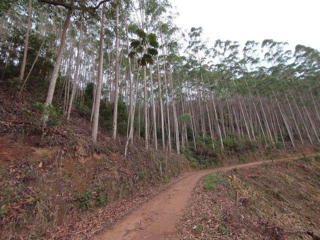 Propriedades 10 alqueires Araguaia - Foto 8