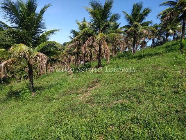 Belíssimo sítio em Sambaetiba com 10.000m² - Foto 14