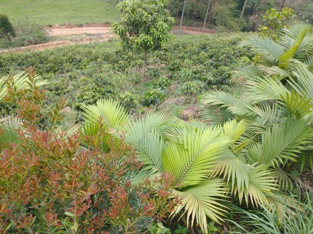 Chácara região Paraju - Foto 10
